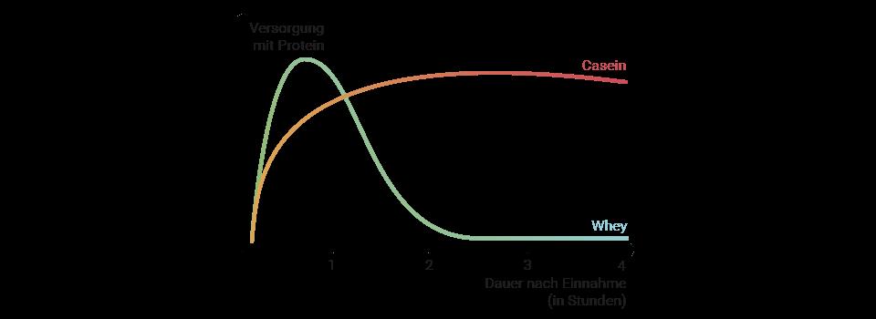 Graph zur Wirkungsdauer der verschienenden Proteine im 3K Protein
