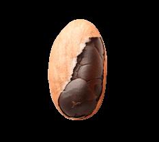 1 Kakaobohne in der Hülle