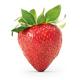 Erdbeere