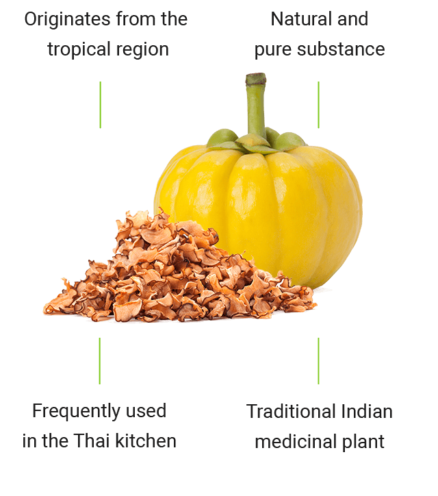 The effects of garcinia cambogia, the tropical medicinal plant