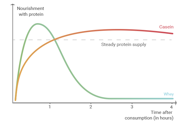 Graph showing the duration of the effect of the various proteins in 3K Protein