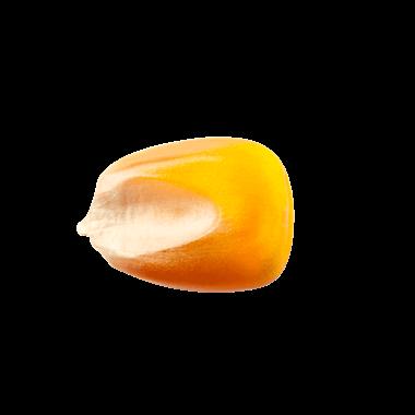 Maiskorn