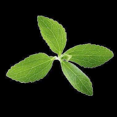 Stevia-Blatt