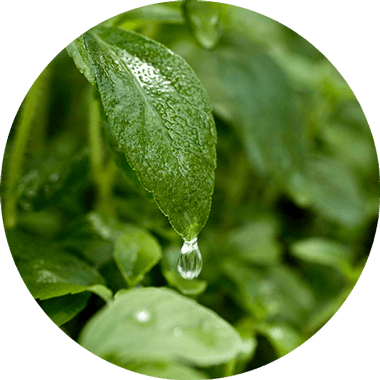 Glucosidi dello steviolo, un estratto purificato delle foglie di stevia
