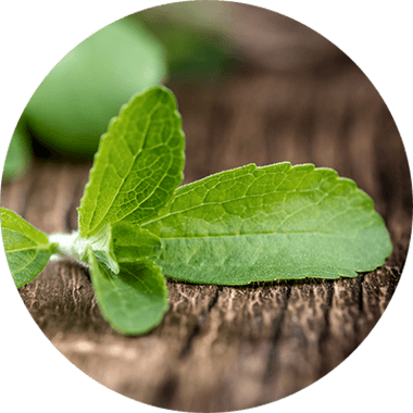 Feuille de Stevia