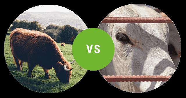 La protéine bio foodspring en comparaison avec les produits concurrents