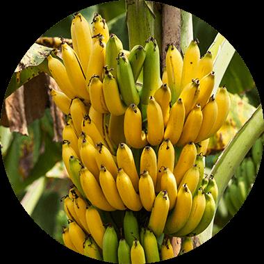 Whey Banana Limited Edition Mood